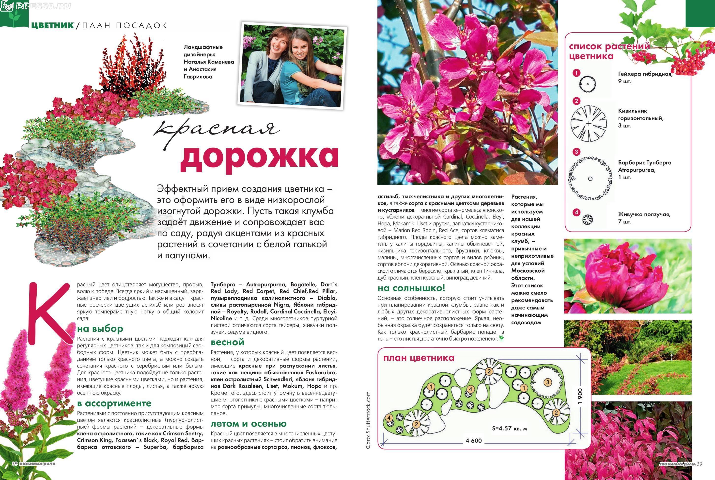 Клумба цветы фото и схема